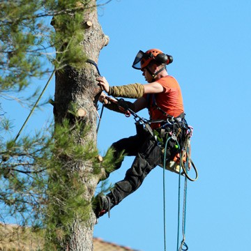 Speciality Insurance   Arborist Insurance