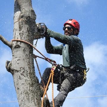 Speciality Insurance | Arborist Insurance